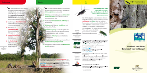 Bild der Titelseite der Publikation: Heldbock und Eiche - Da ist doch was im Gange!