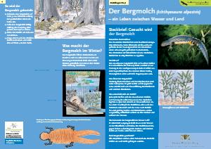 Bild der Titelseite der Publikation: Der Bergmolch