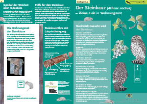 Bild der Titelseite der Publikation: Der Steinkauz [Athene noctua]