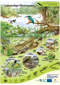 Bild der Titelseite der Publikation: Lebendige Rheinauen