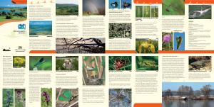Bild der Titelseite der Publikation: Naturschutzgebiet Mindelsee
