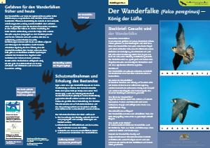 Bild der Titelseite der Publikation: Der Wanderfalke