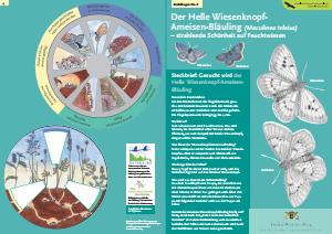 Bild der Titelseite der Publikation: Der Helle Wiesenknopf-Ameisen-Bläuling [Maculinea teleius]