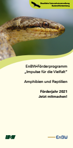 ENBW-Förderprogramm